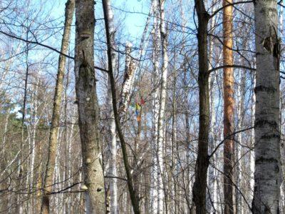 Шары на дереве.