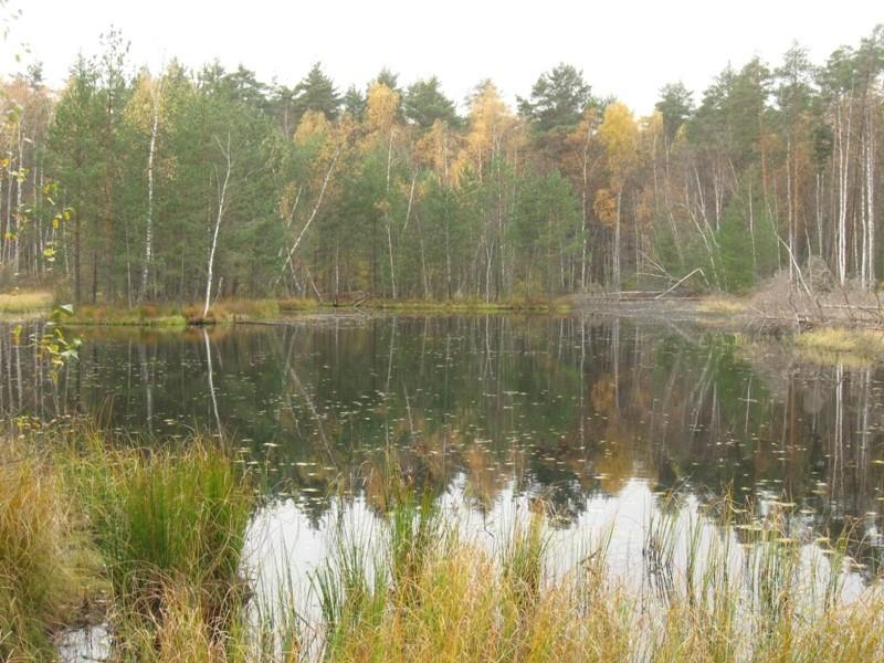 Лесное озеро (Малые Торфа). Осень 2017.