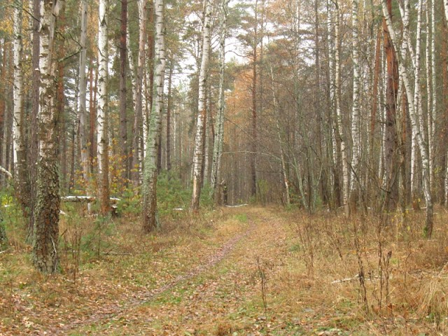 Обуховская дорога и Обухово
