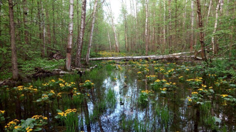Прудки. Поход по весеннему лесу