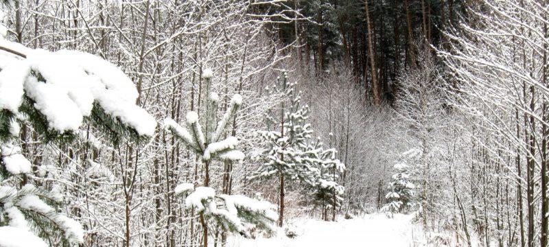 9 января 2020г. лёг снег?