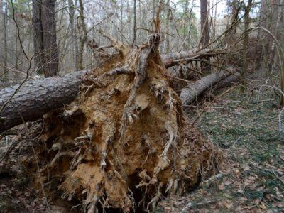 Ветровал. Последствия урагана
