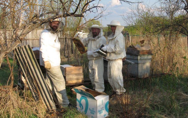 Вопрос о гибели пчёл в г.о. Озёры  взят на контроль