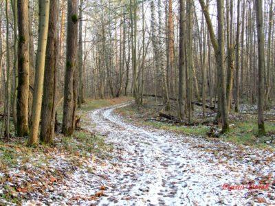 Древняя Обуховская дорога