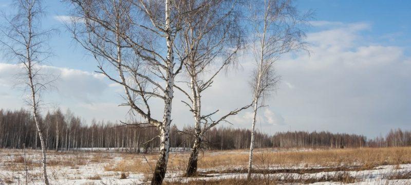 Фотограф Алексей Анисимов с весенними фотографиями