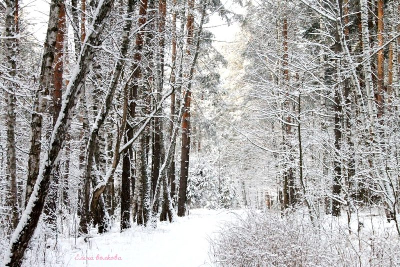 По Обуховской дороге с фотоаппаратом