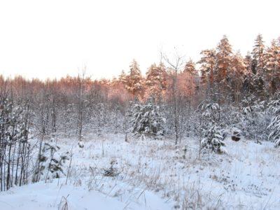 Коляда – зимнее Солнцестояние