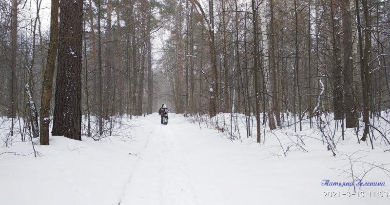 Зовут лесные дороги